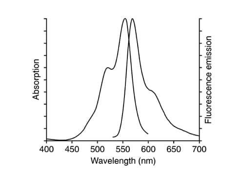 DiI Fluorescence Spectra